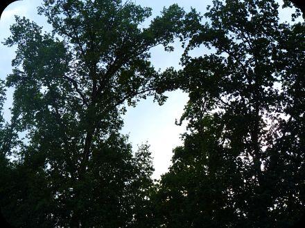 Le coeur dans les arbres...  dans Message du jour 93303510