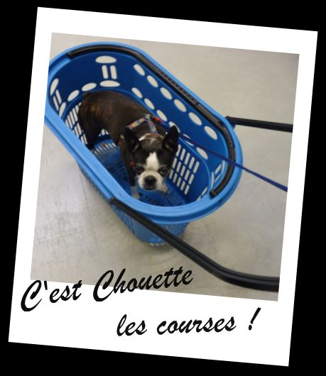 Les vacances de Twiggy ! dans The Dog City 93306110