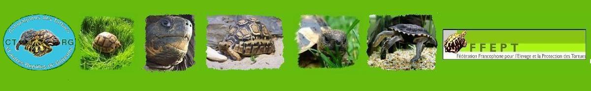 Association CTRG : Compagnons des Reptiles et Tortues de Guyenne