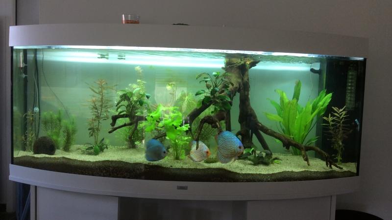 aquarium juwel rio 450 l page 2. Black Bedroom Furniture Sets. Home Design Ideas