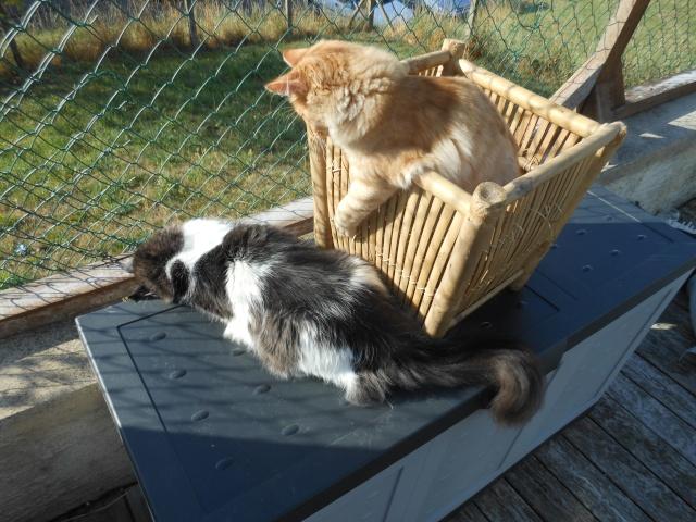 dscn1517 chats dans DIEGO