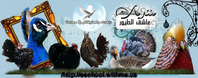 منتدى عالم الطيور