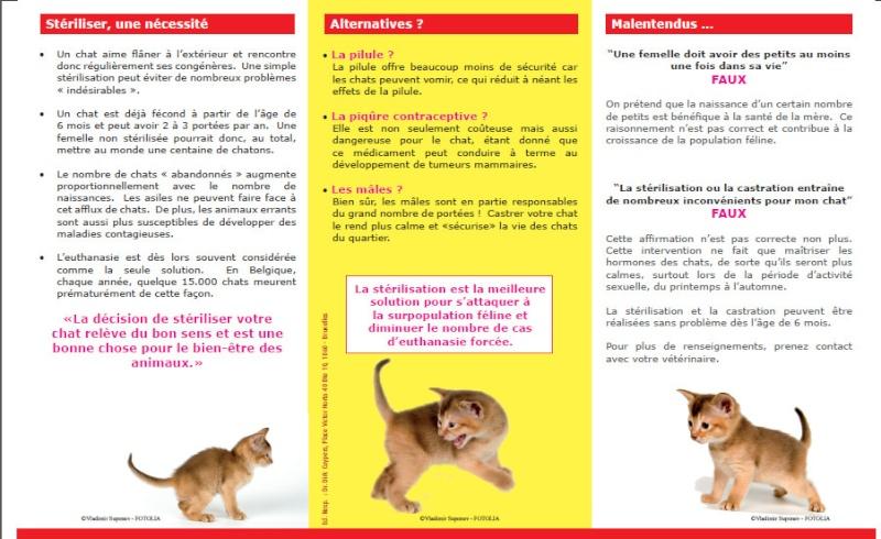 Stérilisation chat gratuite dijon