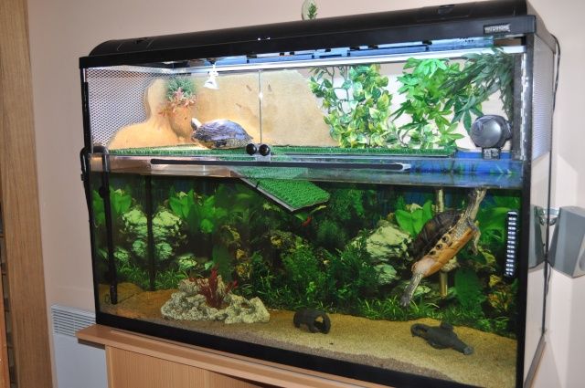 comment amenager un aquarium pour tortue eau