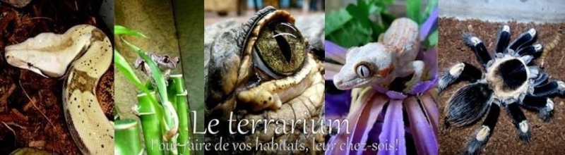 Le terrarium