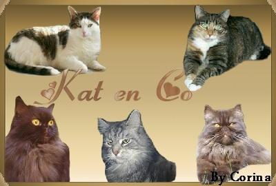 Kat en co