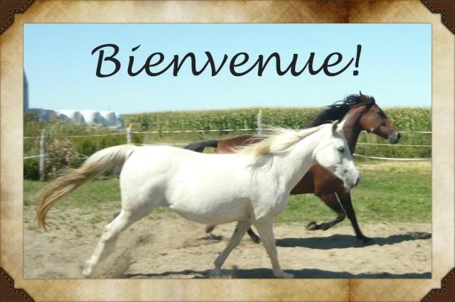 Le cheval dans notre quotidien !