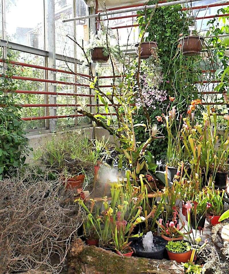 Bourse aux plantes carnivores et atypique 2014 jardin for Jardin aux plantes
