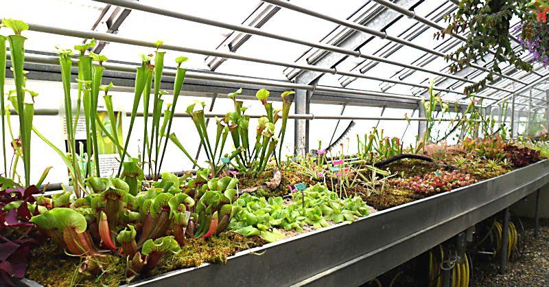 Jardin botanique de porrentruy ju for Plantes et jardins serres