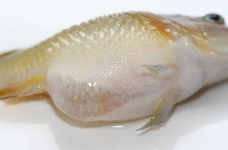 mycose peau symptome