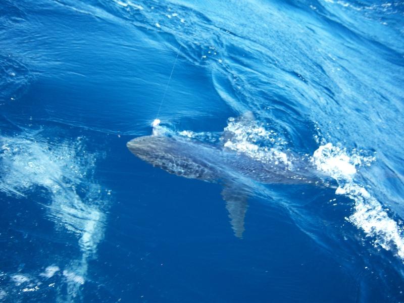 Washington tuna fishing report autos post for Westport charters fishing report