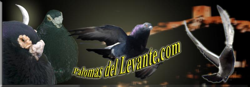 Palomas Del Levante