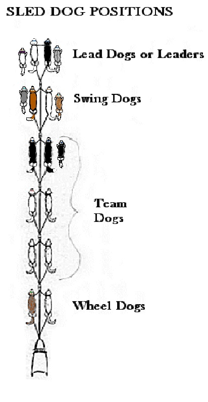 Dog Sled Positions