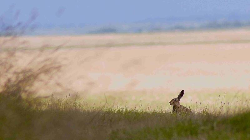Cerf, biche, renard et lièvre...