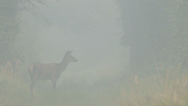 Brouillard matinal...