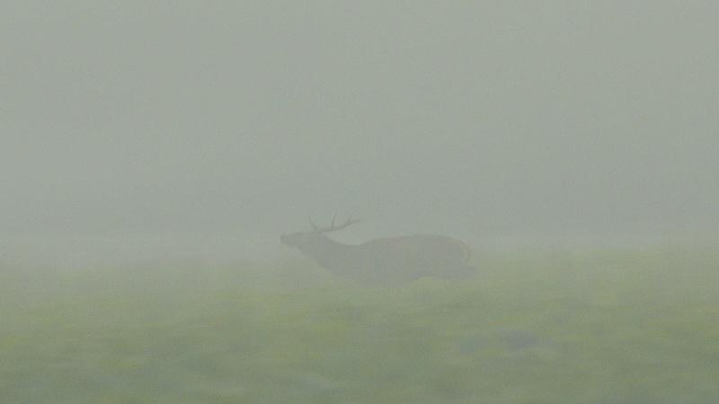 Brame dans le brouillard