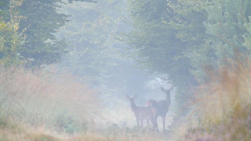 Brame : brouillard...