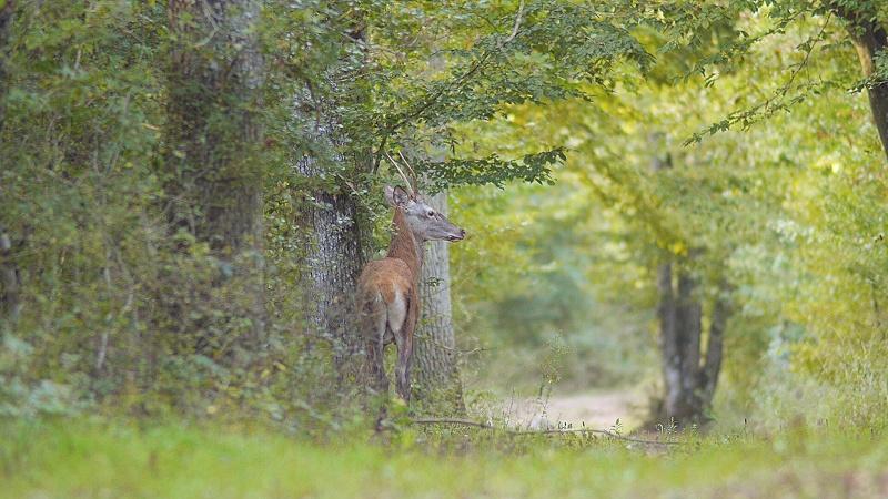 Différents cerfs dont un à tête bizarde...