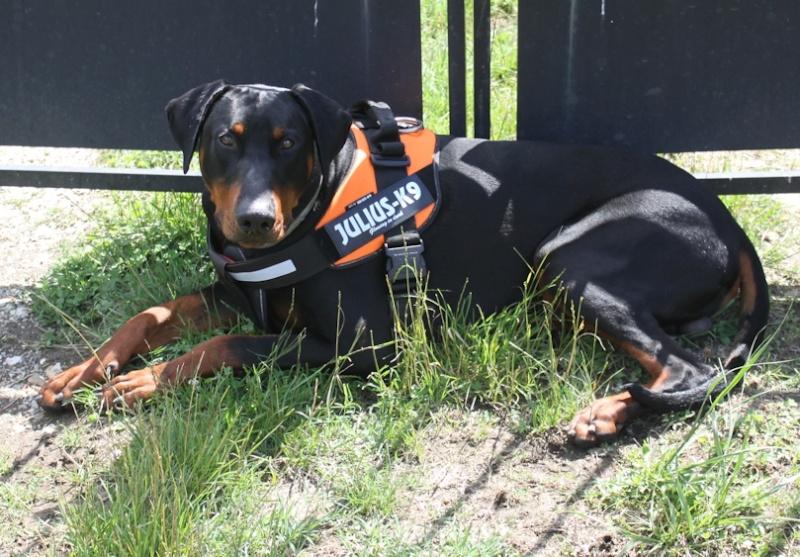 Vos chiens et leurs harnais! Photo - Page 4