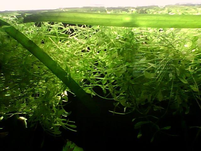 vd 63 ou envoi plante a bouturer ou surface