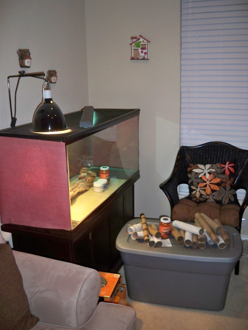 Fs pu ft worth tx 3 high grade bearded dragons and 30 75 for Fish store fort worth