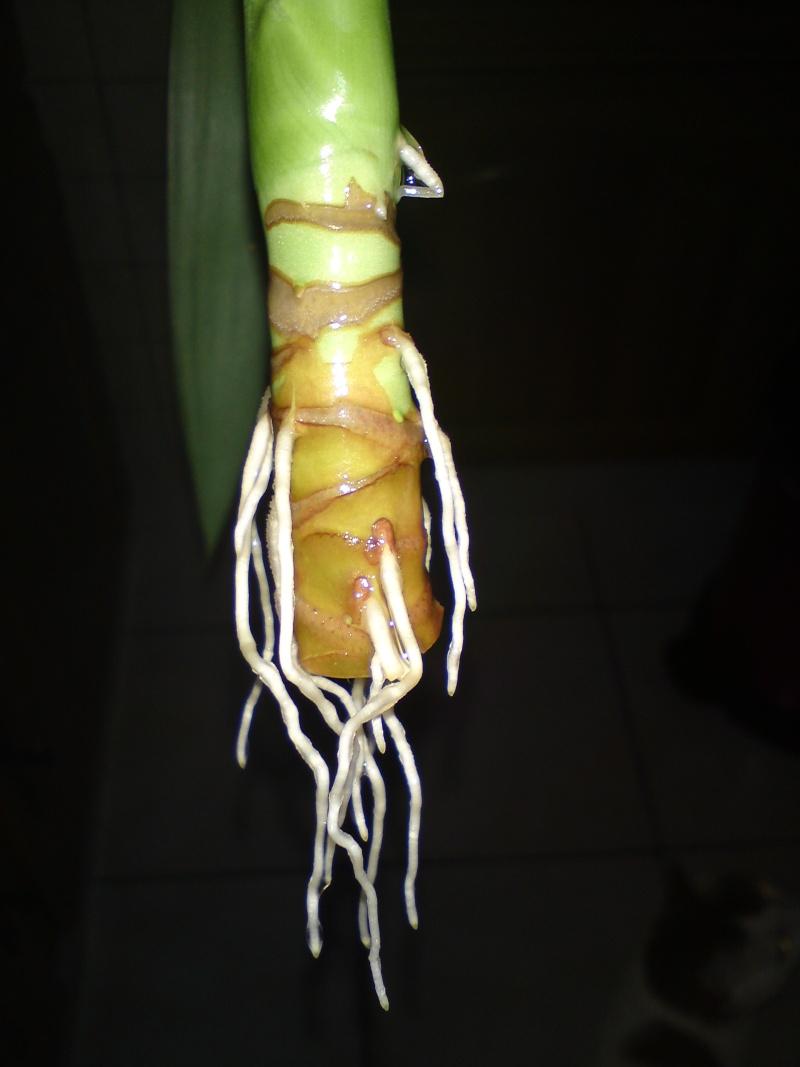 comment sauver mon yucca page 2