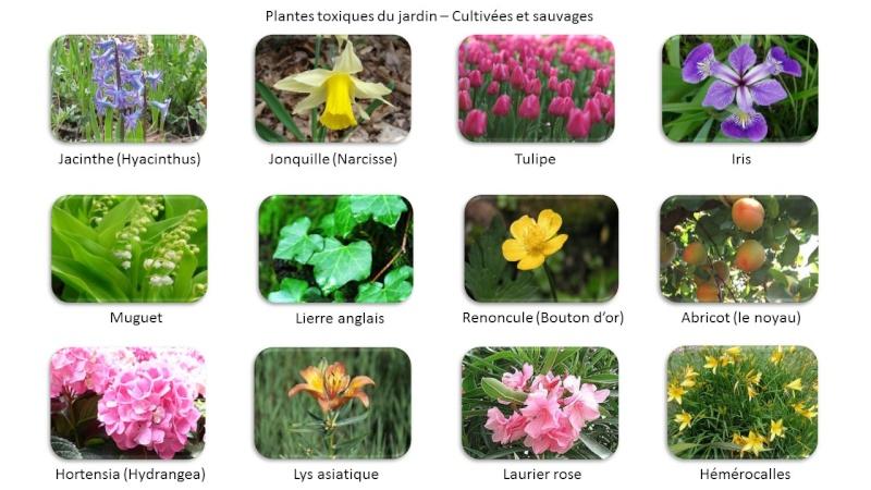 Fido au jardin - Plantes toxiques cultivées et sauvages