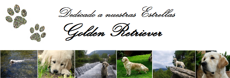 Foro del Golden Retriever