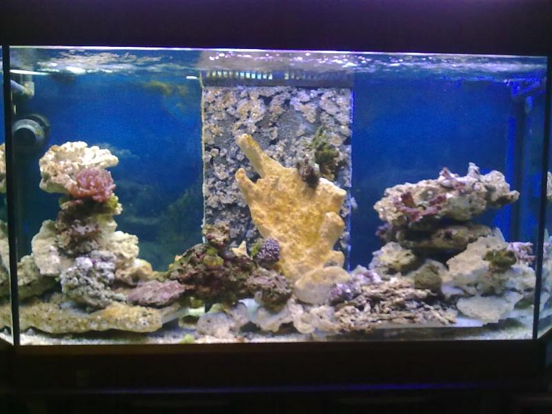 Nouvel aquarium eau de mer for Eau de mer aquarium