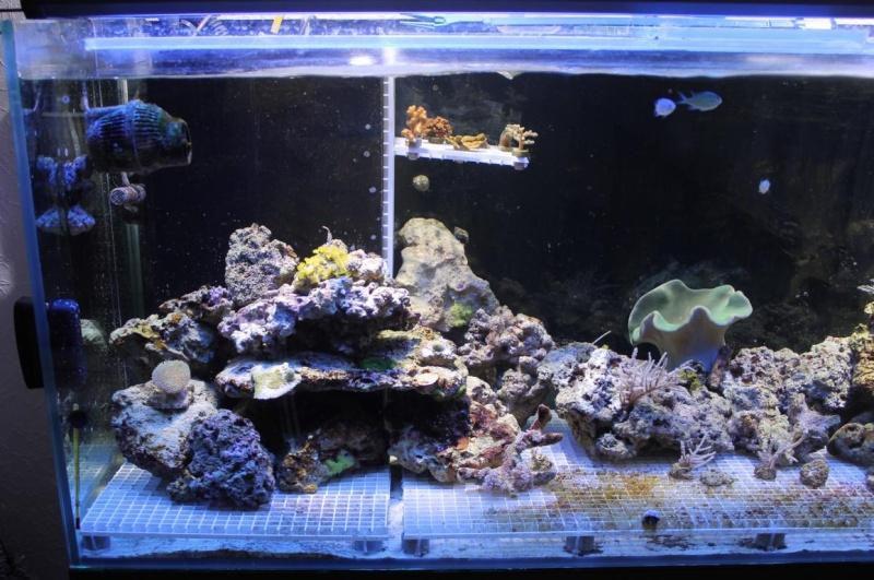 nouvel aquarium 140 litres page 2. Black Bedroom Furniture Sets. Home Design Ideas