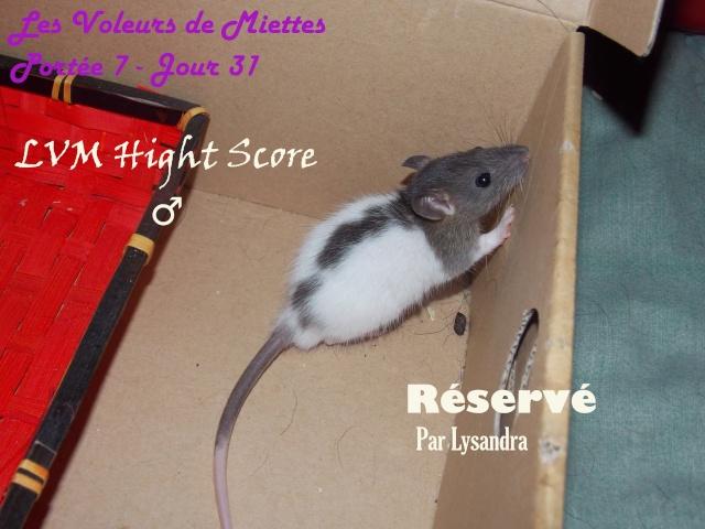 hight_11.jpg