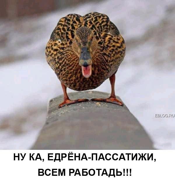 http://i39.servimg.com/u/f39/15/99/40/99/37951010.jpg