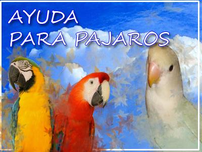 Información sobre pájaros