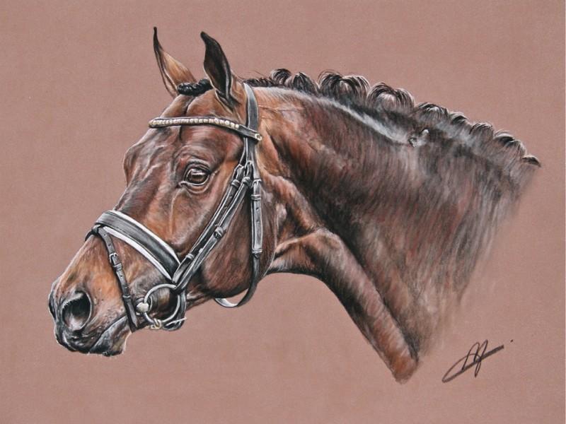 Un dessin de votre cheval vid o page 27 - Dessin de cheval magnifique ...