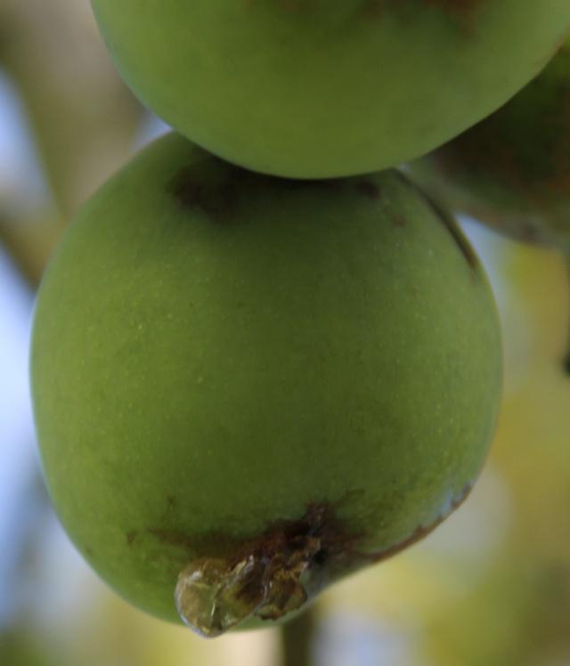 Un fruit de l'été dans MOMENT DE VIE 02310