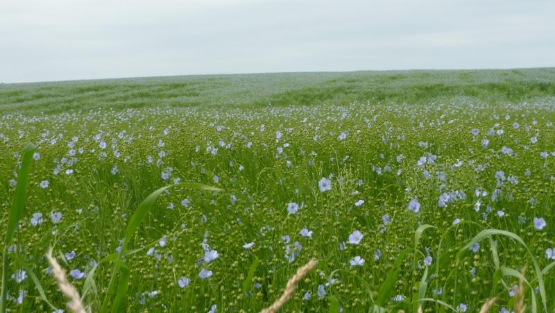 Belles des champs dans MOMENT DE VIE fleurs10