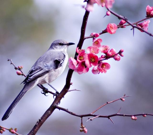 Le chant des oiseaux dans LES 4 SAISONS oiseau10