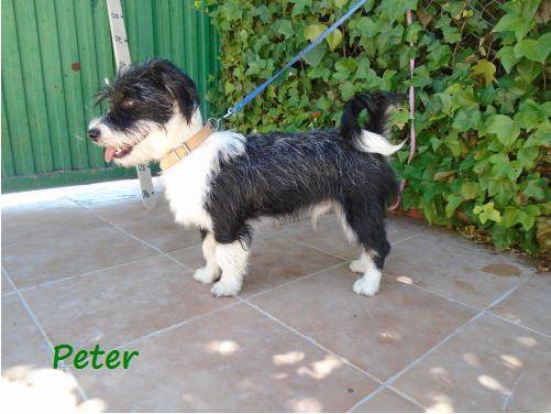 peter_11.jpg