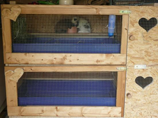 construire un clapier en int 233 grant cage plastique
