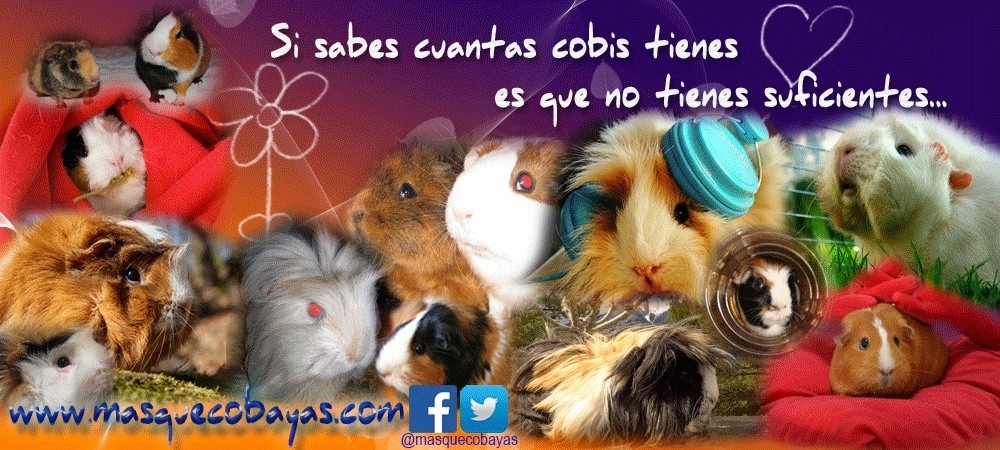 FORO COBAYAS