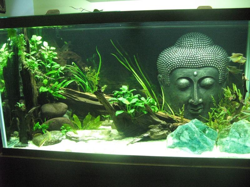 Clear sealant for aquarium decor for Aquarium decoration sealant