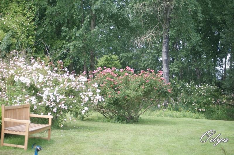 Les chemins de la rose dou la fontaine 49 - Jardin de la rose doue la fontaine ...