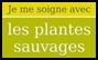 Ces plantes qui nous font du bien !
