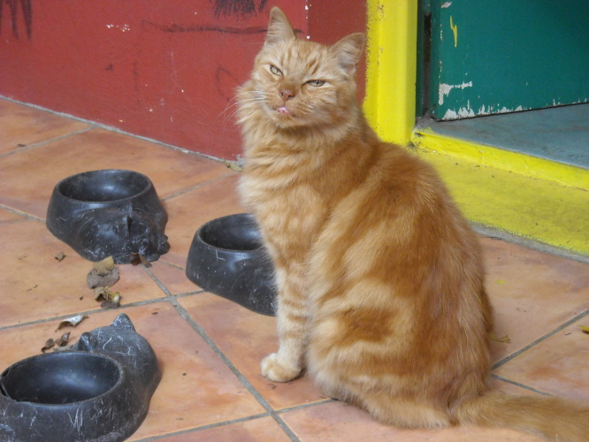 chat Castres