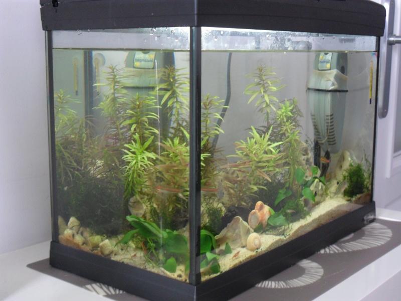 Vend aquarium 25 litres 59 62 30 euros for Vend aquarium