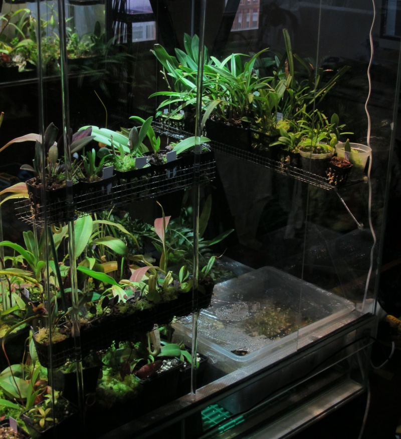 My Orchids Mainly Miniature Orchids Carnivorous Plants Uk