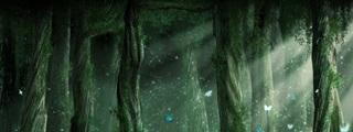 http://i39.servimg.com/u/f39/17/13/53/41/forest10.jpg