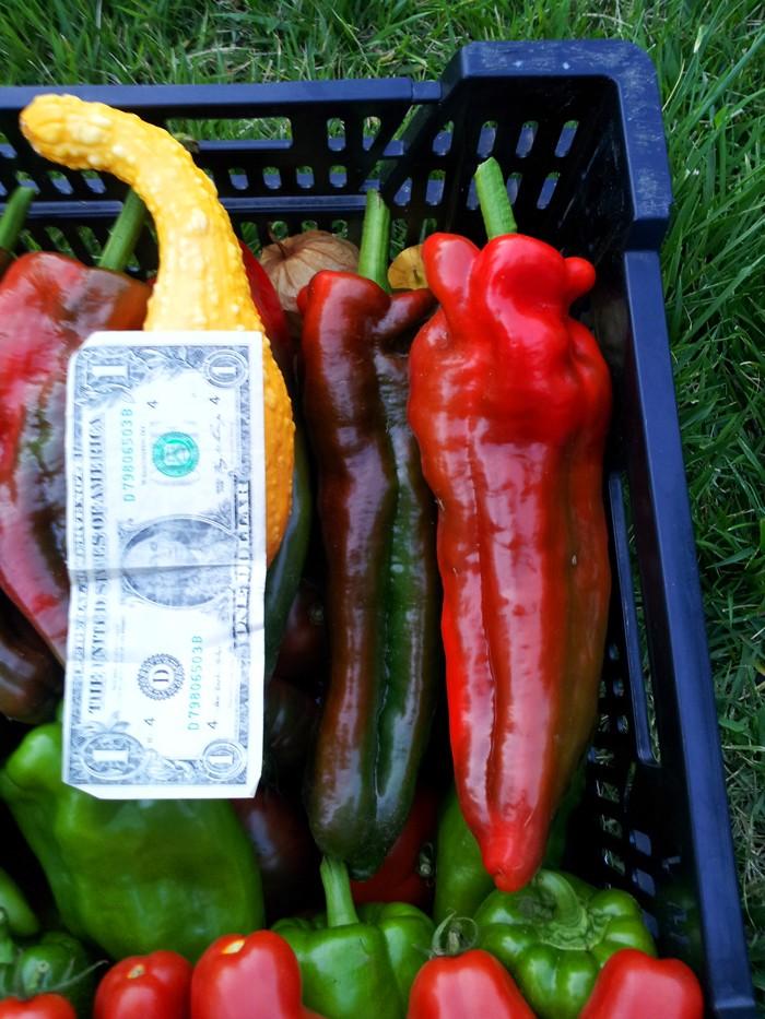 pepper14.jpg
