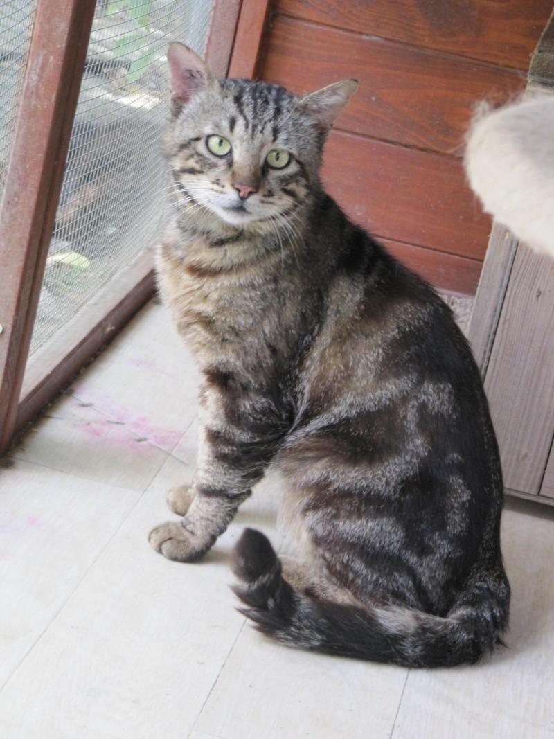 Chat tigr trouv au centre commercial des marrots - Centre commercial colomiers ...