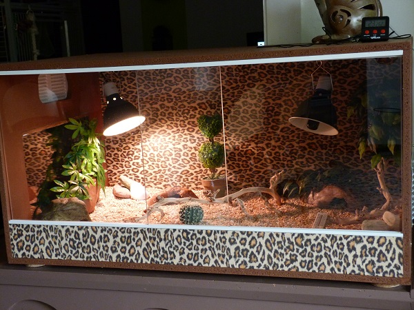 le terrarium de mandarine. Black Bedroom Furniture Sets. Home Design Ideas